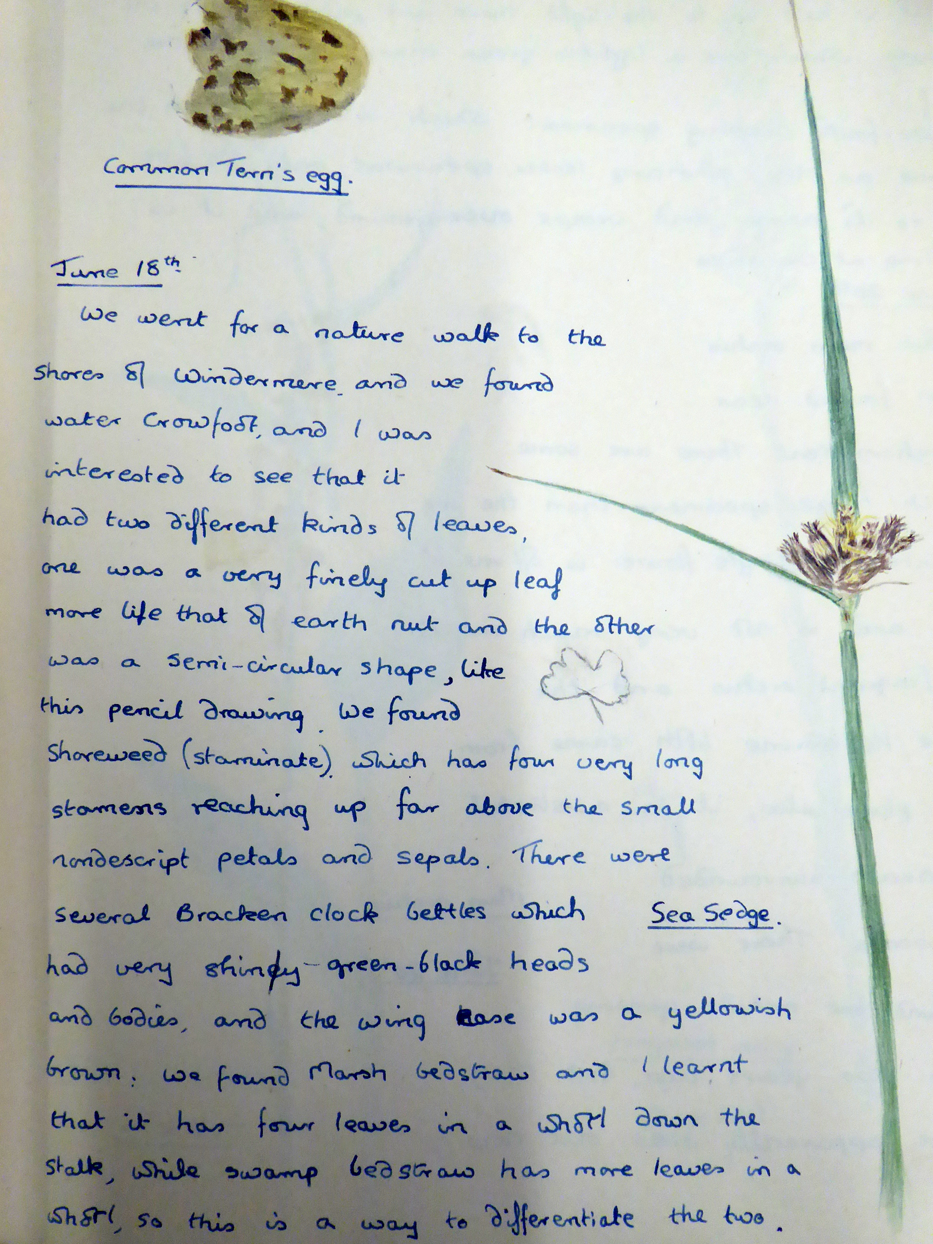 Images of Eve Anderson's Nature Notebook provided by The Armitt Trust